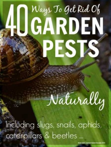 40 ways to get rid of garden pests naturally home and garden - How to get rid of bugs in garden ...