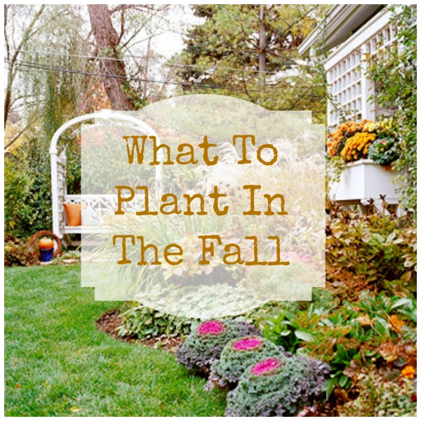 fallplanting