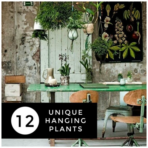 Unique Ideas For Hanging House Plants Home And Garden
