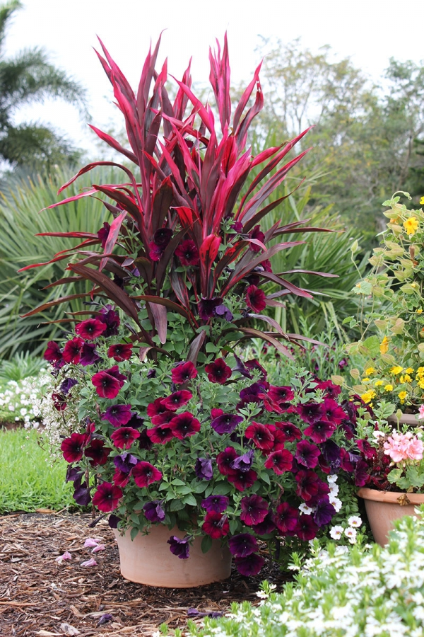 Outdoor potted plants full sun - photo#14