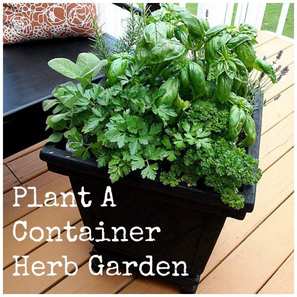 how to grow a one pot herb garden