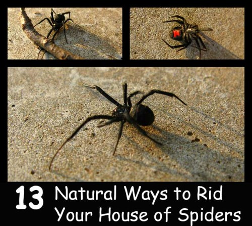 how to get rid of spiders in bathroom