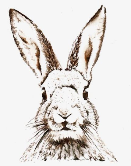 Printable Wall Art Easter Bunny Sketch