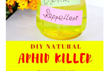Make your own Aphids Killer
