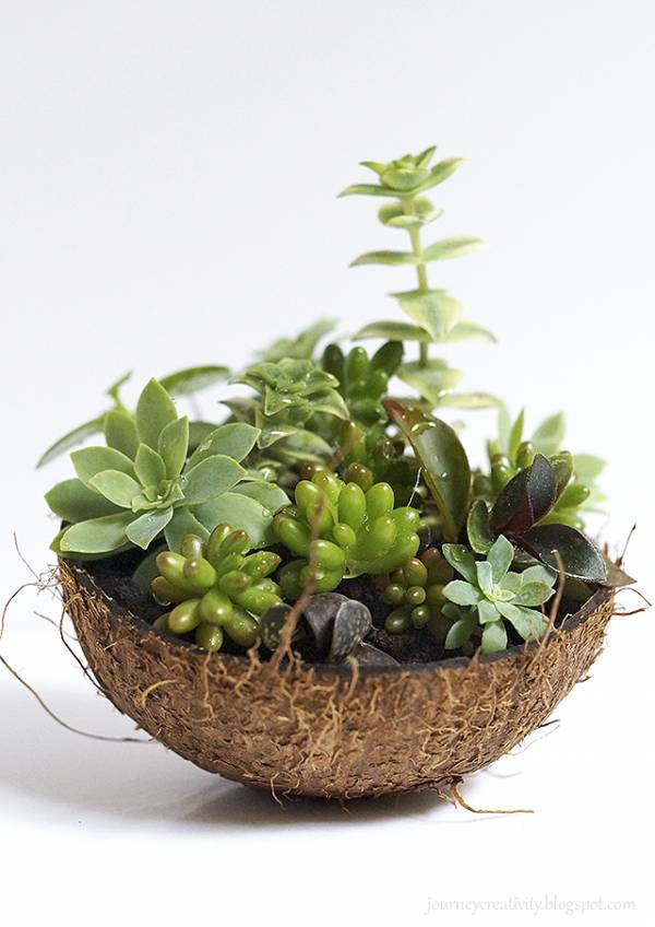 DIY Coconut Succulent Pot