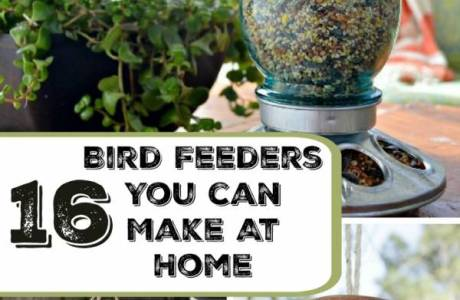 16 Bird Feeders You Can Make At Home