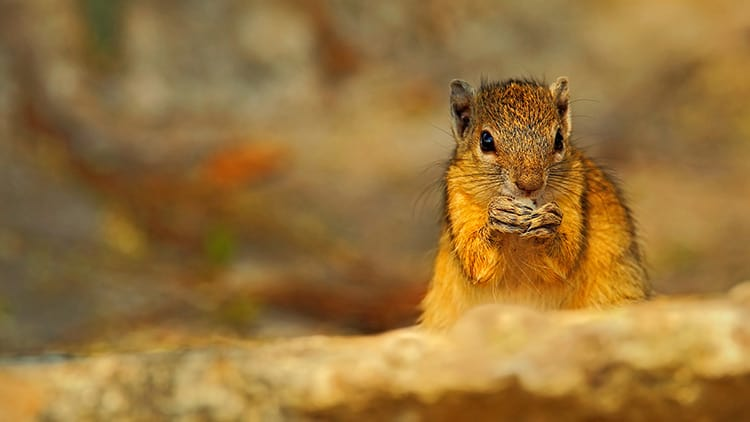 Read more about the article What Do Squirrels Like To Eat?