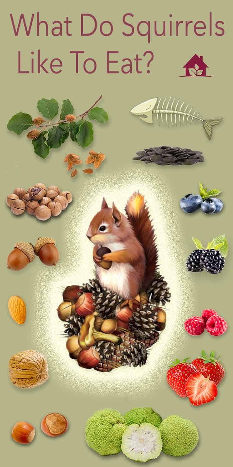 what squirrels eat