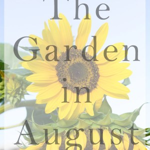 garden in august title image