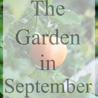The Garden in September