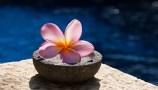 Bali_Frangipani virág