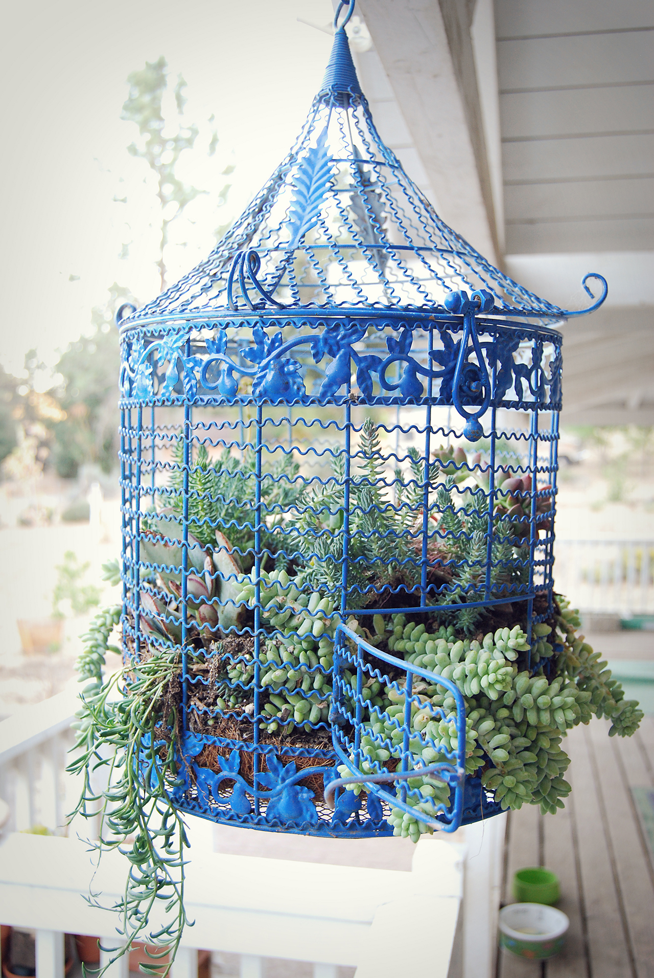 20 Best Decoration Ideas with Birdcage planters in 2020 on Birds Backyard Landscapes  id=46116
