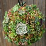 50 Best Succulent Garden Ideas For 2021