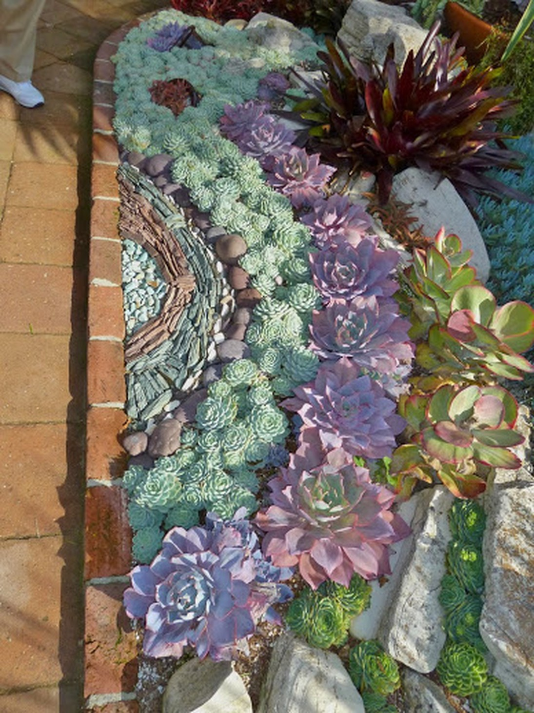 50 Best Succulent Garden Ideas for 2016 on Tree Planting Ideas For Backyard id=37642