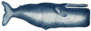 whaleplatter