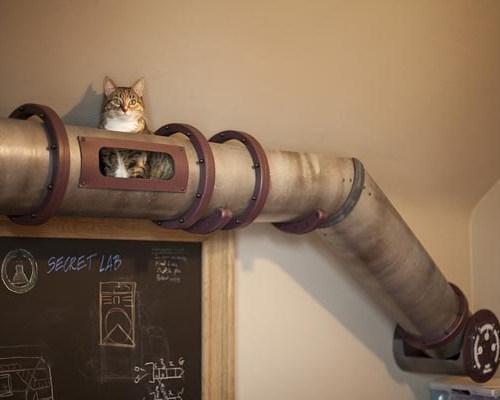 cat transport system