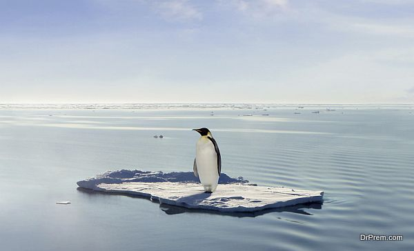 A penguin managed to get on a floe drifting through Antarctica. Due to Global Warming the ice has melted and only a few dry places are left over.