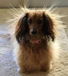 static electricity dog hair