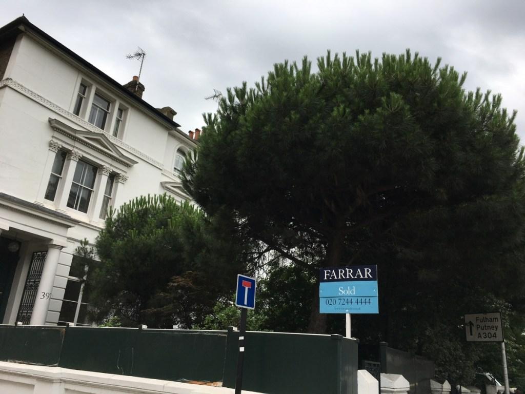 garden and tree maintenance