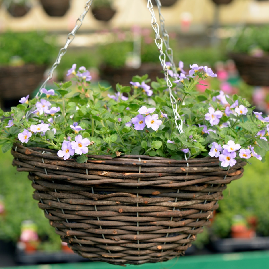 Best plants for hanging baskets Ideas with Images on Hanging Plants Ideas  id=50159