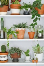 Inspiring Indoor Plans Garden Ideas To Makes Your Home More Cozier 02