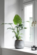 Inspiring Indoor Plans Garden Ideas To Makes Your Home More Cozier 45