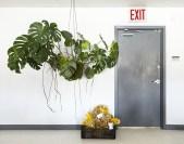 Inspiring Indoor Plans Garden Ideas To Makes Your Home More Cozier 49