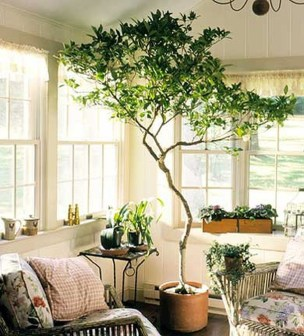 Inspiring Indoor Plans Garden Ideas To Makes Your Home More Cozier 52
