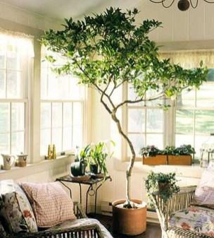 Inspiring Indoor Plans Garden Ideas To Makes Your Home More Cozier 52