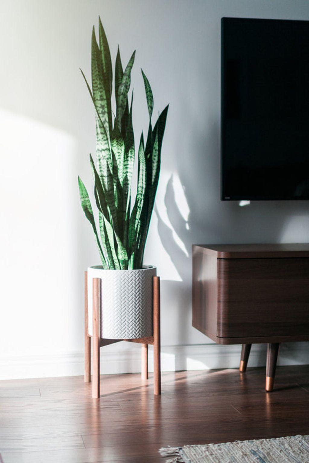 Inspiring Indoor Plans Garden Ideas To Makes Your Home More Cozier 73
