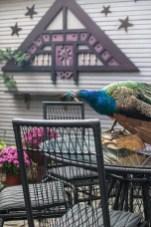 Adorable Outdoor Dining Area Furniture Ideas 19