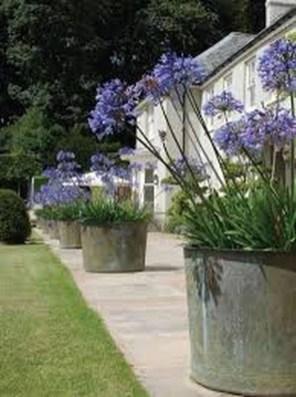 Amazing Backyard Fairy Garden Ideas On A Budget 16