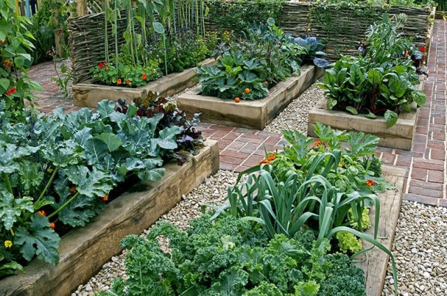19 Awesome Gardening Ideas For Beginners Leafpanda