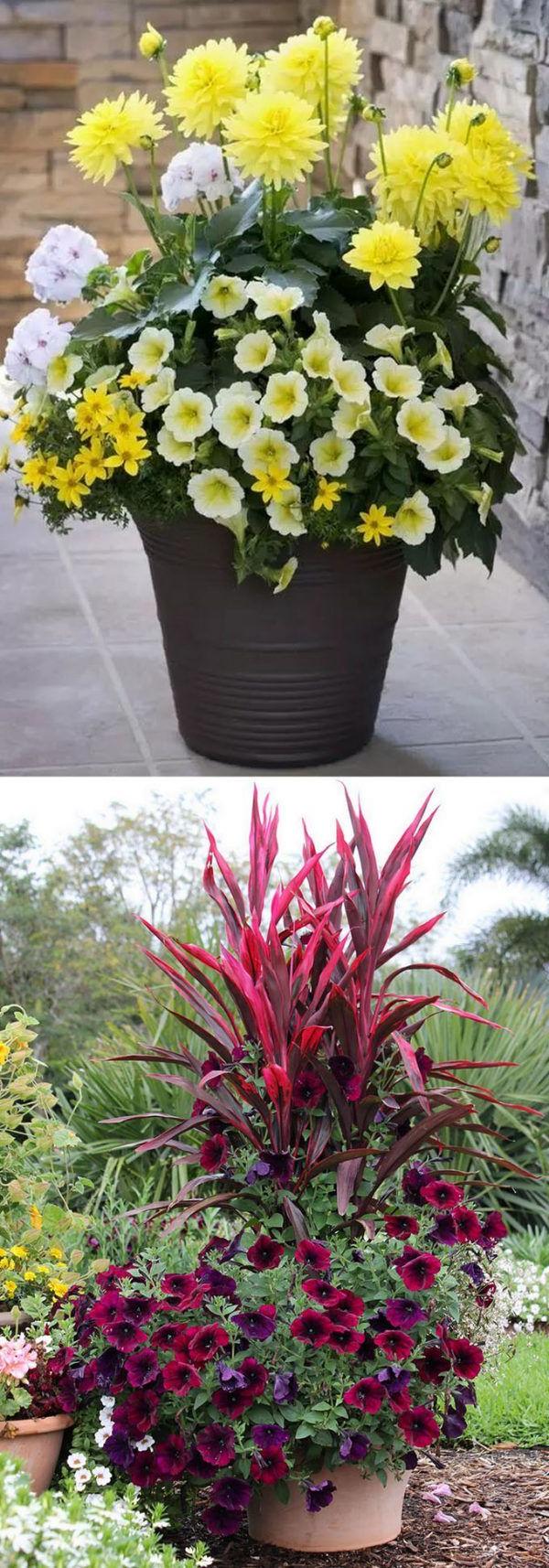24 Stunning Container Garden Planting Ideas Plants
