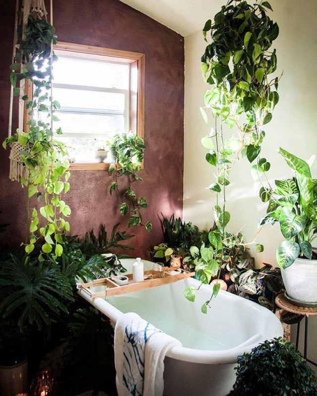 30 Best Indoor Jungle Ideas That Are Calm And Peaceful