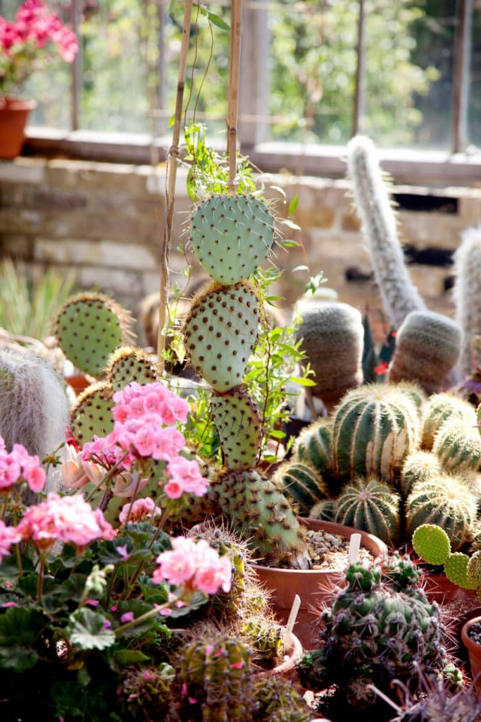 34 Sharp Cactus Garden Ideas Garden Inspiration Amazing