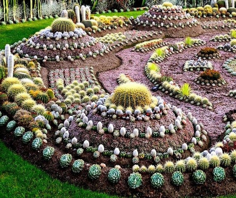 40 Pretty Cactus Garden Ideas For Best Garden