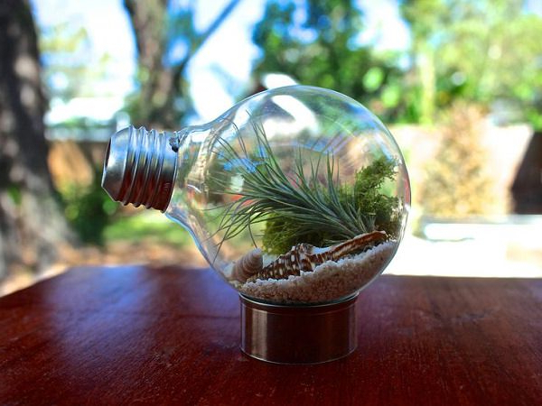 51 Most Amazing Air Plant Display Ideas Gardening Viral