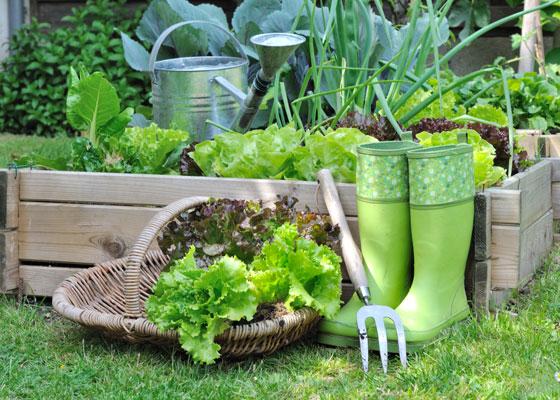 8 Spring Gardening Trends Spotted On Pinterest Garden Club