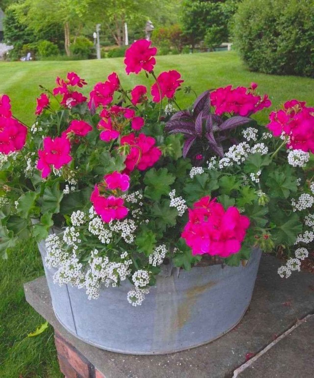 85 Beautiful Summer Container Garden Flowers Ideas
