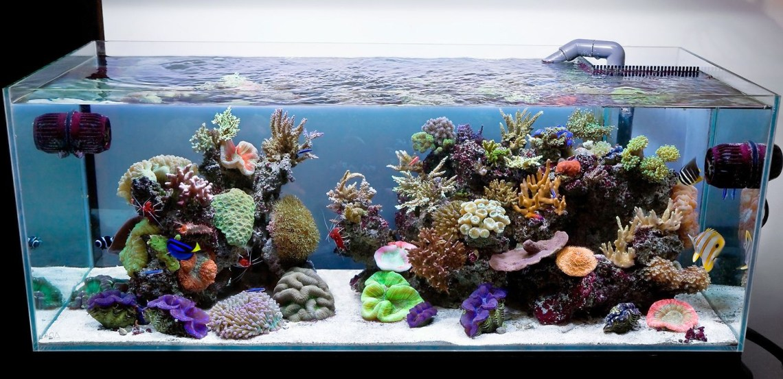 Aqua Design Amano 120 P Overflow Model Open Top Reef