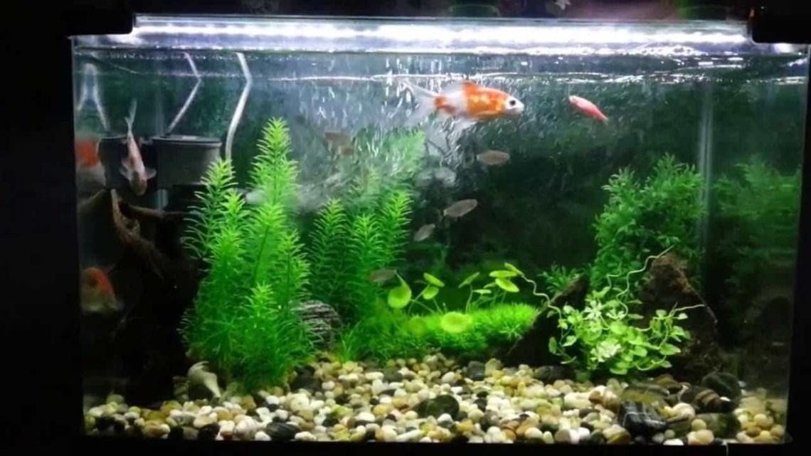 Aquarium With Artificial Rocks And Plants Decorative