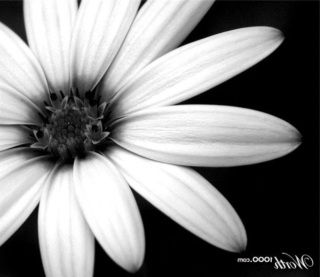 Black And White Flowers Google Search Black And White
