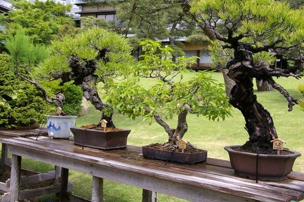 Bonsai Garden An Incredible Charm In Miniature Scale