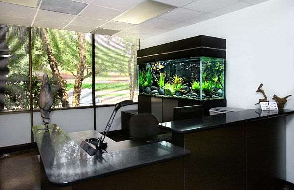 Brilliant Home Office Aquarium So Natural With Relaxing