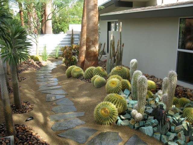 Cacti Garden Xeriscape Succulent Landscape Design