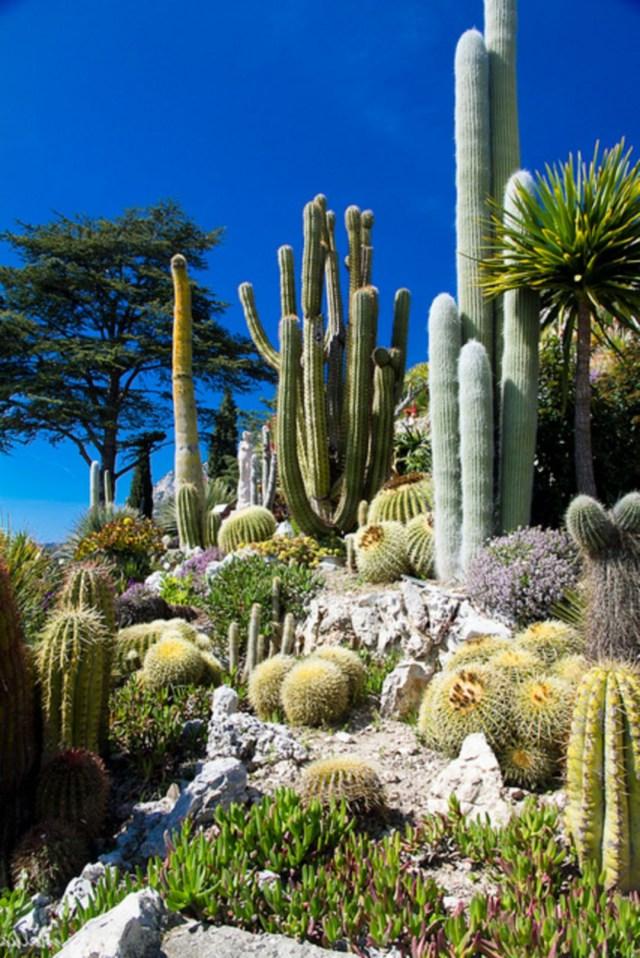 Cactus Garden Ideas331 Decorathing