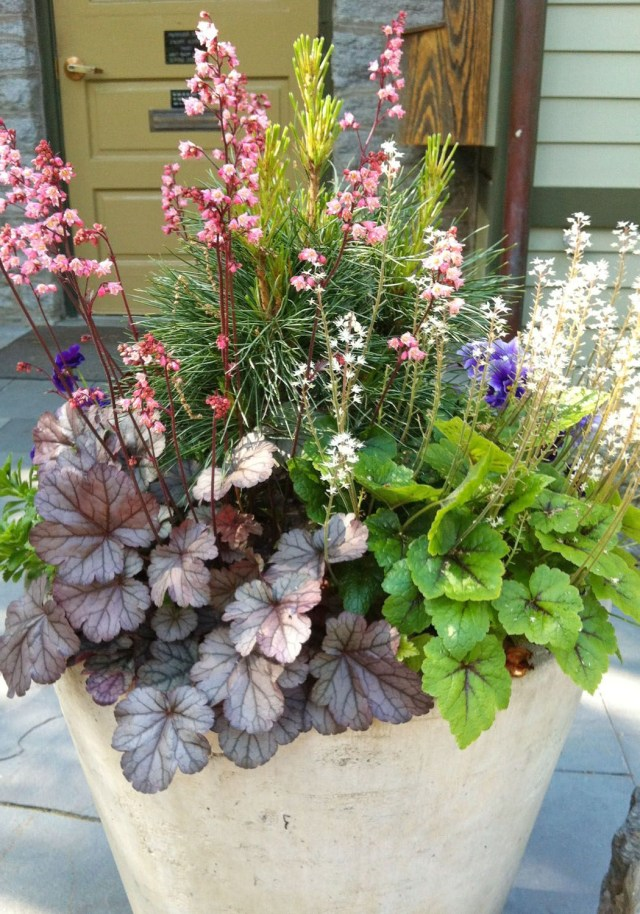 Container Garden Container Plants Container Flowers