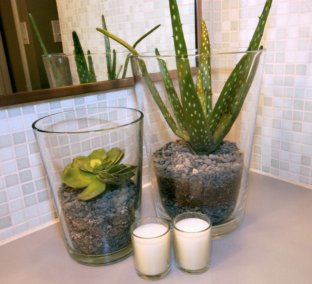 Cool Elegant And Healthy Indoor Plants Homesfeed