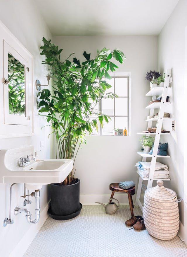 Decorating Drama 10 Really Big Plants You Can Grow